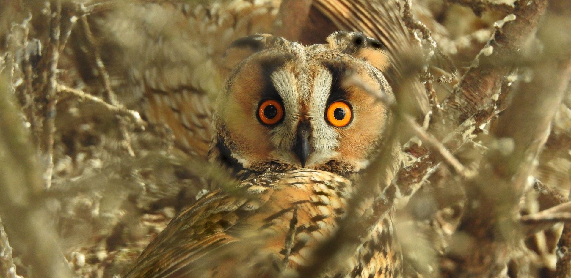slider_owl2